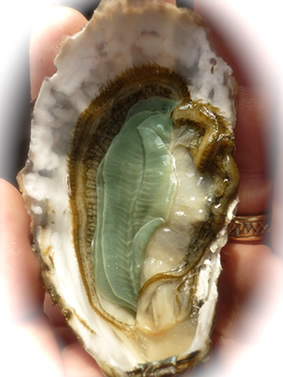 jade oyster from Freycinet
